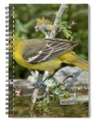 Orchard Oriole Female Spiral Notebook