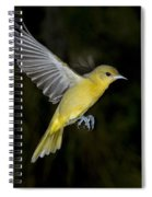 Orchard Oriole Hen Spiral Notebook