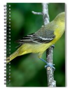 Orchard Oriole Icterus Spurius Female Spiral Notebook