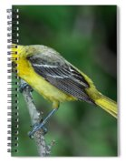 Orchard Oriole Icterus Spurius Juvenile Spiral Notebook
