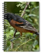 Orchard Oriole Male Spiral Notebook