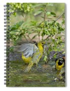 Orchard Orioles Spiral Notebook