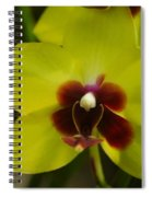 Orchid 153 Spiral Notebook