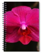 Orchid 199 Spiral Notebook