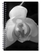 Orchid #2 Spiral Notebook
