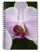 Orchid #4 Spiral Notebook