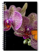 Orchid And Orange Butterfly Spiral Notebook