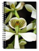 Orchid Encyclia Fragrans Spiral Notebook