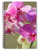 Orchid Flowers Art Prints Pink Orchids Spiral Notebook