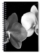Orchid In Black And White Spiral Notebook