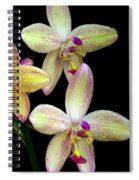 Orchid In Blossom Spiral Notebook