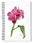 Orchid - Lc. Culminant La Tuilerie Spiral Notebook