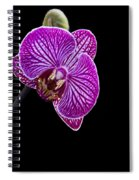 Orchid On Black Background Spiral Notebook