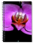 Orchid One Spiral Notebook