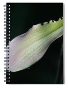 Orchid Petal Spiral Notebook