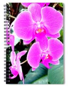 Orchid Series 1 Spiral Notebook