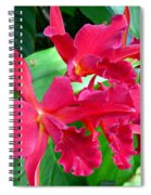 Orchid Series 3 Spiral Notebook