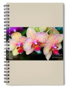 Orchid Trio Spiral Notebook