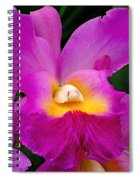 Orchid Variations 1 Spiral Notebook