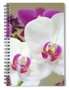 Orchids Floral Art Prints White Pink Orchid Flowers Spiral Notebook