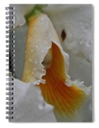 Orchid's Inner Glow Spiral Notebook