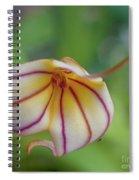 Orchids - Masdevallia Hybrid Spiral Notebook