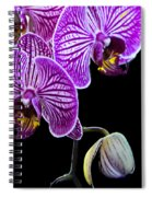 Orchids On Black Background Spiral Notebook