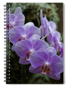 Orchids Square Format Img 5437 Spiral Notebook