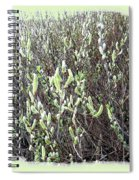 Oregon Willow Catkins Spiral Notebook