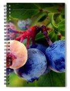 Organic Blues Spiral Notebook