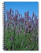 Organic Lavender Spiral Notebook
