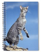Oriental Cat Spiral Notebook