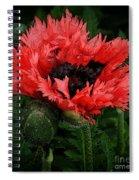 Oriental Poppy Spiral Notebook
