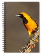 Oriole On Ocotillo Spiral Notebook