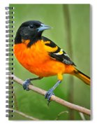 Oriole Perched Spiral Notebook