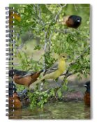 Orioles At The Pool Spiral Notebook