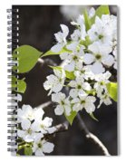Ornamental Pear Blossoms No. 1 Spiral Notebook