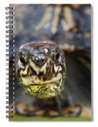 Box Turtle Close-up Spiral Notebook