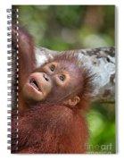 Orphan Baby Orangutan Spiral Notebook