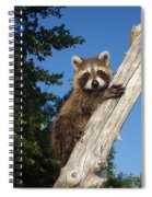 Orphaned Raccoon Spiral Notebook