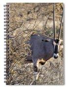 Oryx Long Horned Antelope Spiral Notebook