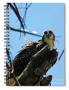 Osprey 1 Spiral Notebook