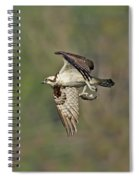 Osprey Carrying Small Fish Spiral Notebook