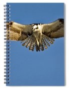 Osprey Hovering Spiral Notebook