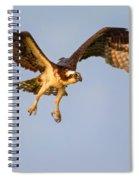 Osprey In Flight Spiral Notebook