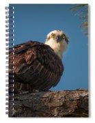Osprey In Pine 3 Spiral Notebook