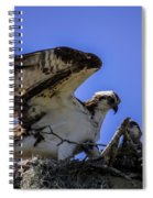 Osprey In The Nest Spiral Notebook