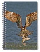 Osprey Morning Catch Spiral Notebook