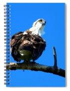 Osprey On A Branch Spiral Notebook