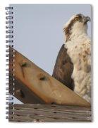 Osprey -seahawk Spiral Notebook